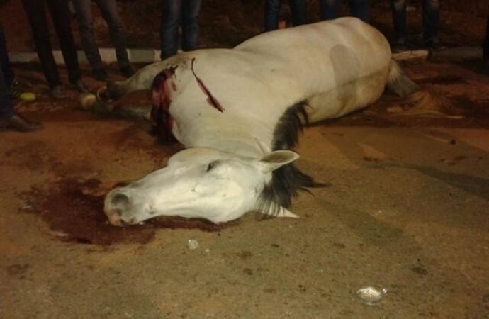 Égua morta após o acidente