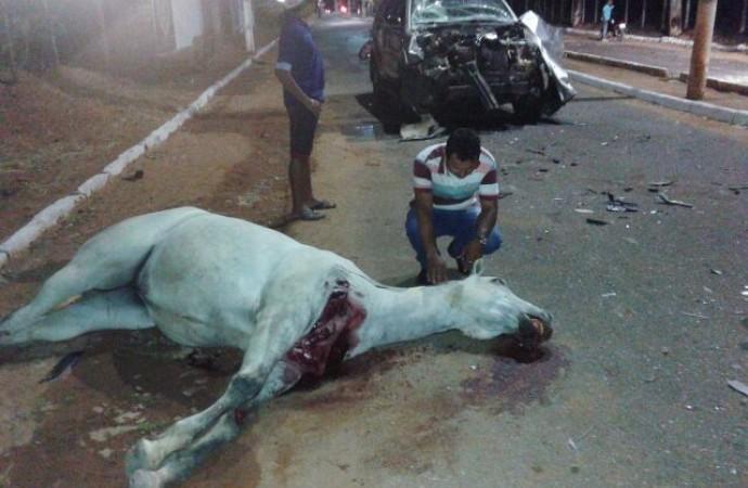 Morte do animal comoveu populares