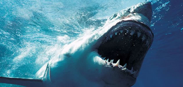 10 tubarões mais perigosos do planeta