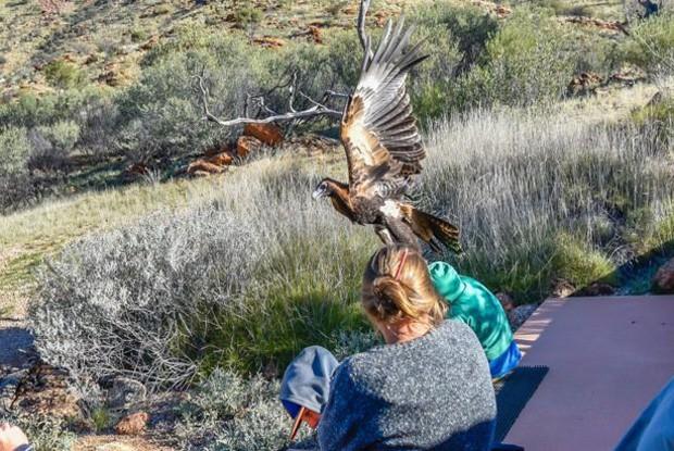 Águia teria levantado menino do chão, segundo relatos (Crédito: Christine O'Connell)