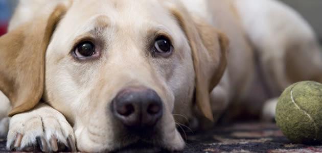 Depressão acontece também com animais? Tire sua dúvida!
