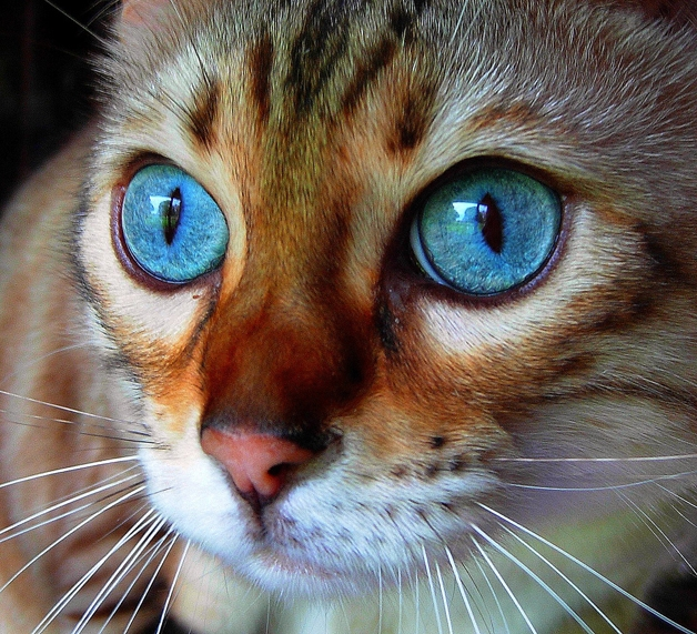 Gatos (Crédito: Reprodução)