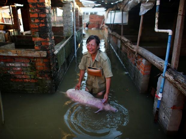 Mulher chora morte de porco em fazenda inundada em Xiaogan, na China