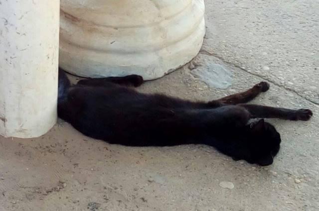Animais morrem envenenados em Picos (Crédito: Reprodução)