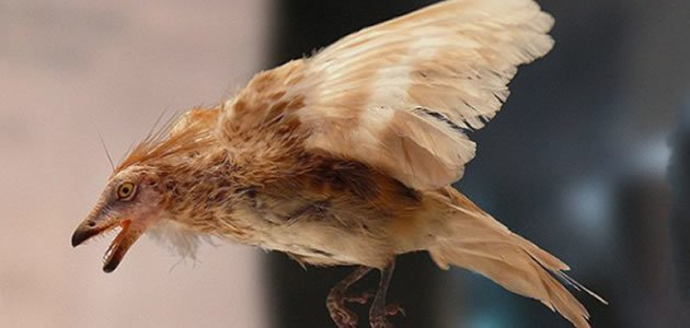 Ave pré-histórica possuía plumagem igual as aves de hoje