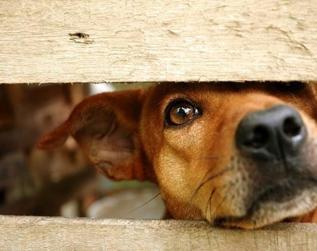 Cães abandonados (Crédito: Reprodução)