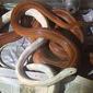 Homem é preso acusado de criar cobras sem autorização do Ibama