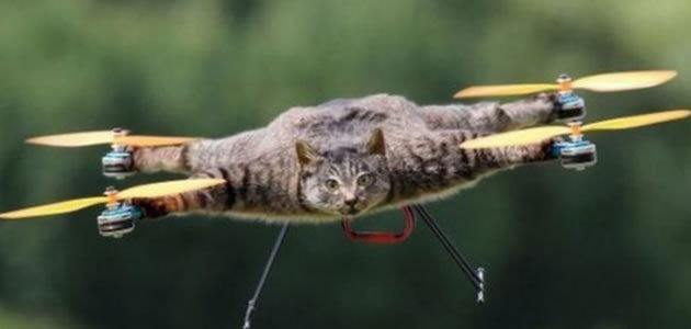 Homem usa corpo de gato para fazer drone