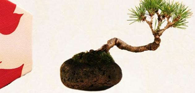 Designer Japonês cria planta flutuante