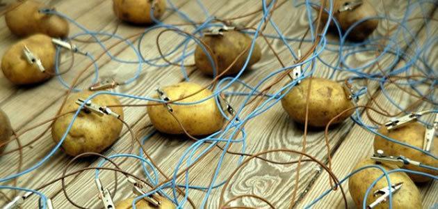 Batata cozida pode iluminar quarto por mais e um mês