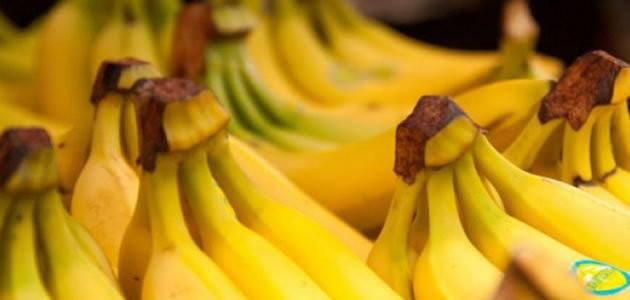 Doença pode acabar com bananas em cinco anos