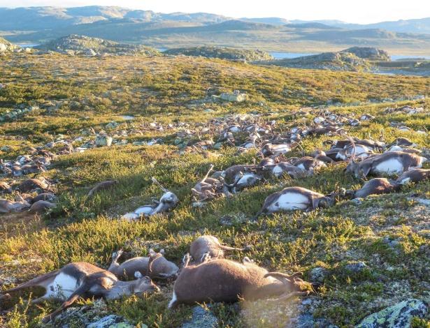 Renas mortas em uma área pequena do terreno (Crédito: AFP)