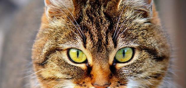 Animais são capazes de prever a morte?