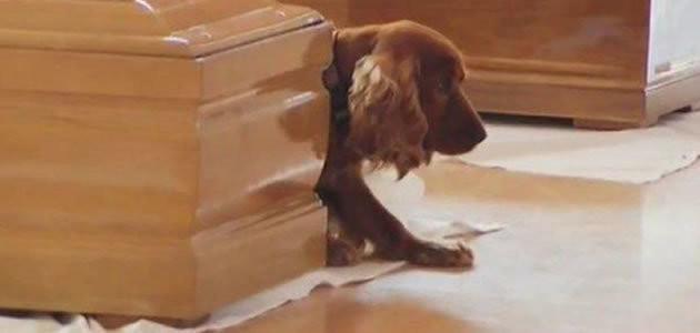 Cão comove ao não abandonar caixão do dono na Itália