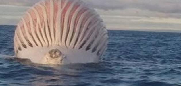 Pescadores ficam impressionados com esfera gigante no mar