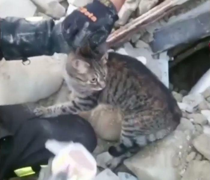 Momento em que o gato foi resgatado (Crédito: Reprodução)