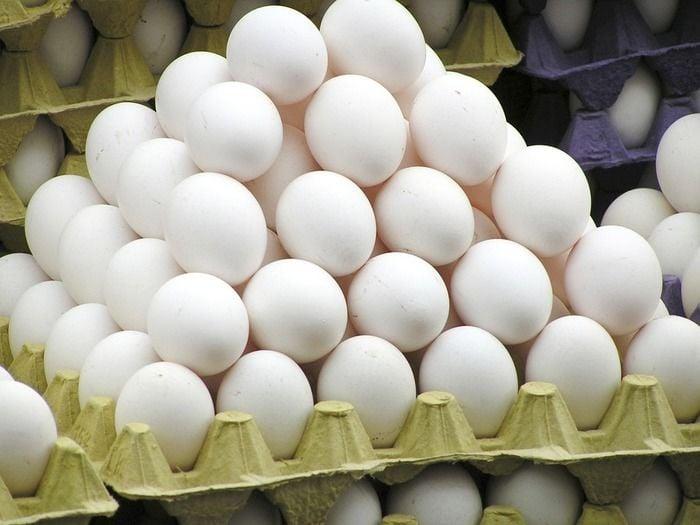 Brasil bate recorde na produção de ovos de galinha (Crédito: Reprodução)
