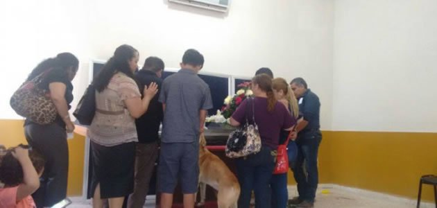 Cão desaparecido reaparece em velório da dona
