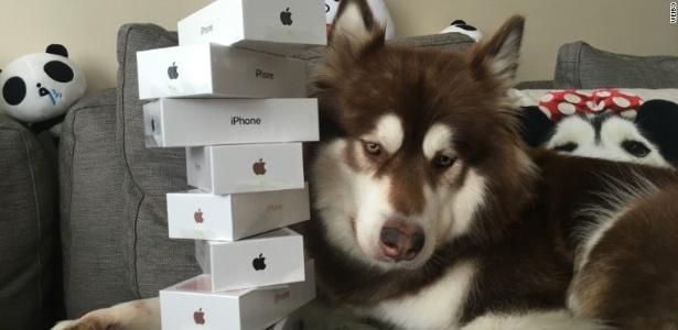 Cachorro ganha oito iPhones 7 (Crédito: Reprodução)