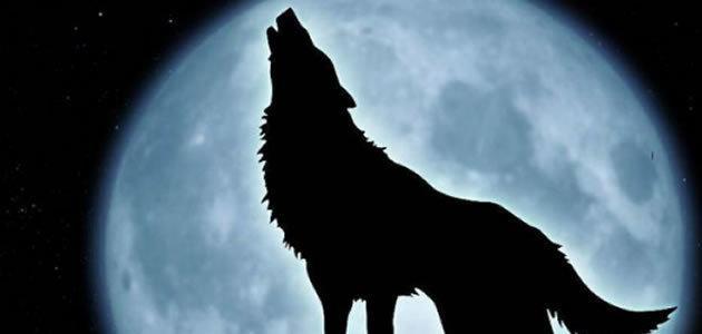 7 coisas que você precisa saber sobre os lobos