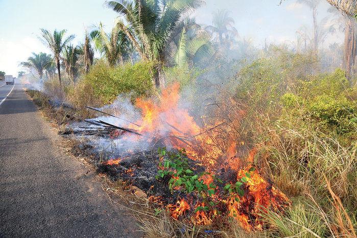 Fogo atinge mata às margens de rodovia no Piauí (Crédito: Efrém Ribeiro)