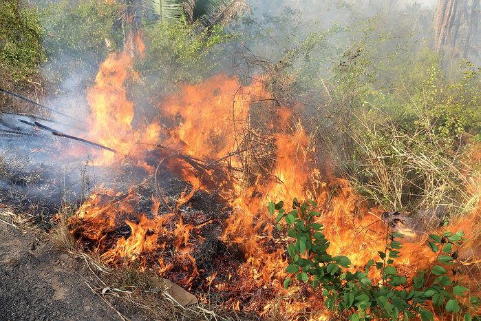 Número de queimadas aumenta no Piauí (Crédito: Efrém Ribeiro)
