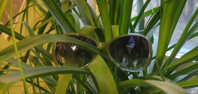 As plantas podem enxergar?