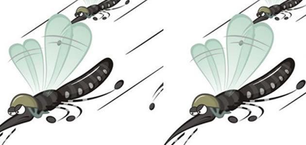 De onde vem o zumbido dos pernilongos?