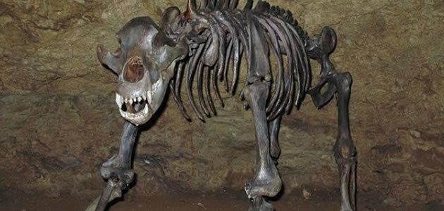 Ursos das cavernas foram extintos por serem vegetarianos