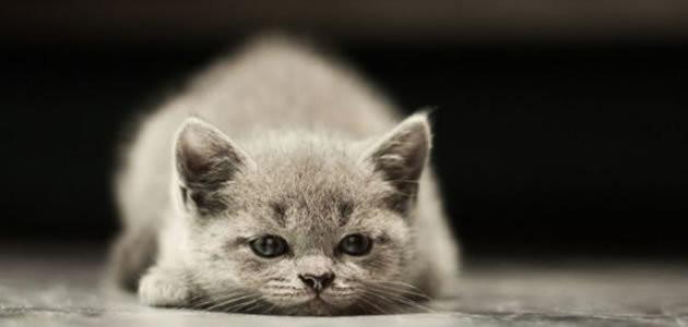 Por que os gatos são tão egoístas?