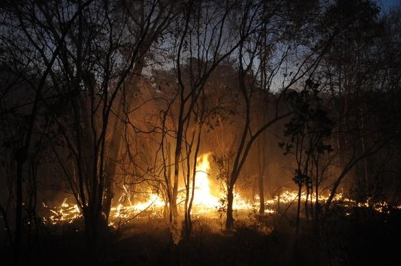 Queimada no interior do Piauí (Crédito: Francisco Leal)