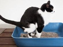 Todos os gatos enterram o seu cocô?