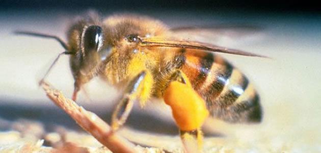 10 animais mais perigosos do mundo