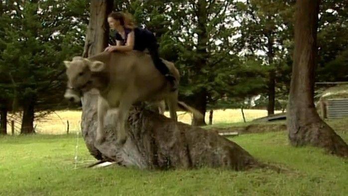 Menina pratica 'hipismo' com sua vaca de estimação e vídeo viraliza