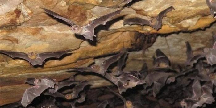 Espécie de morcego começa a se alimentar de sangue humano no Brasil