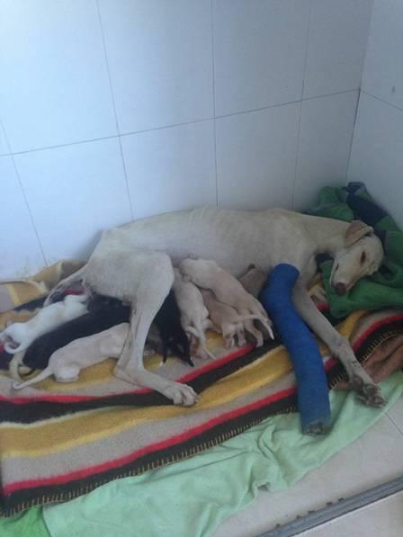 Cadela 'pede' ajuda e leva cuidadoras para salvar seus filhotes
