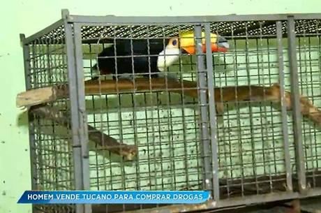 Homem vende tucano por R$ 10 para comprar drogas