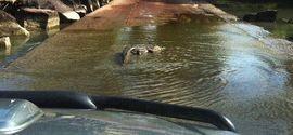 Homem é morto por crocodilo ao cruzar ponte alagada a pé