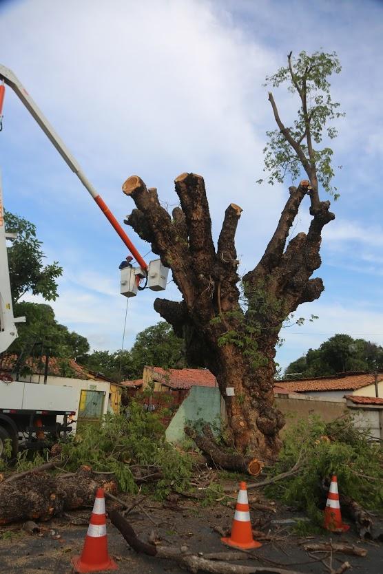Árvore de 52 anos é podada, mas população temia que ela fosse cortada