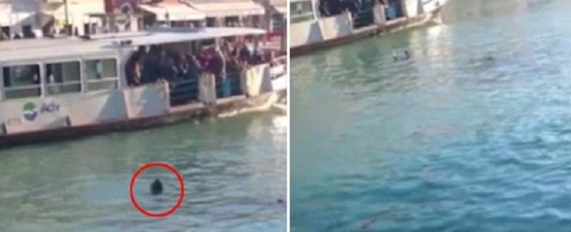 Refugiado morre afogado perto de barco e não recebe ajuda