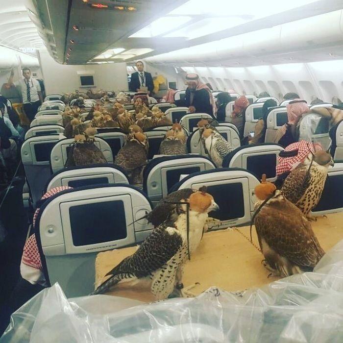 Falcões na aeronave (Crédito: Reprodução)