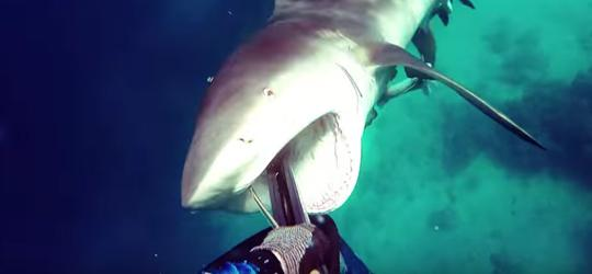 Homem é atacado por tubarão durante mergulho na Austrália; vídeo