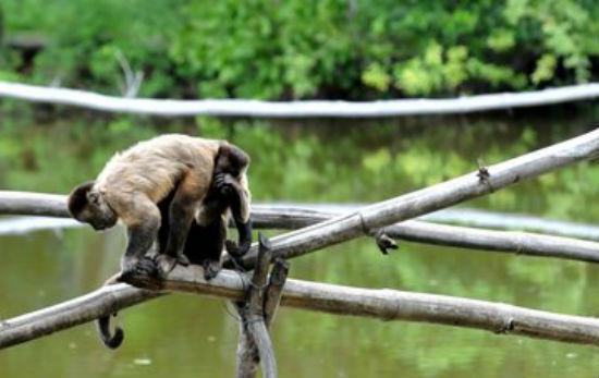 Parque Zoobotânico é opção de lazer para o Dia das Crianças (Crédito: Paulo Barros)