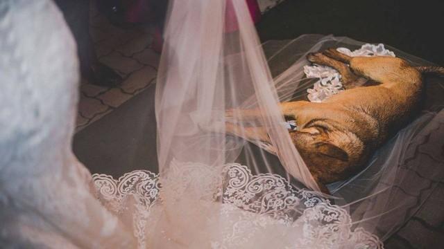 Vira-lata invade cerimônia de casamento e é adotado por noivos