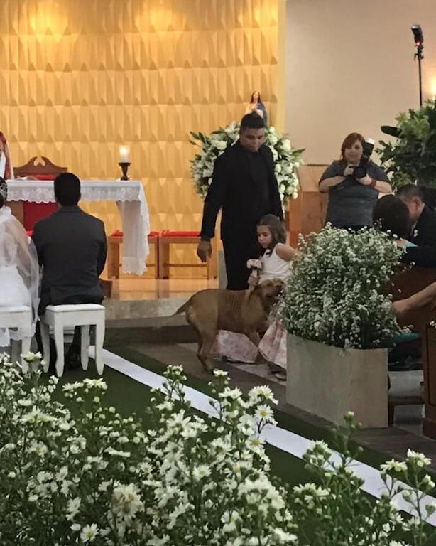 Pitbull rouba a cena em casamento (Crédito: Arquivo Pessoal)