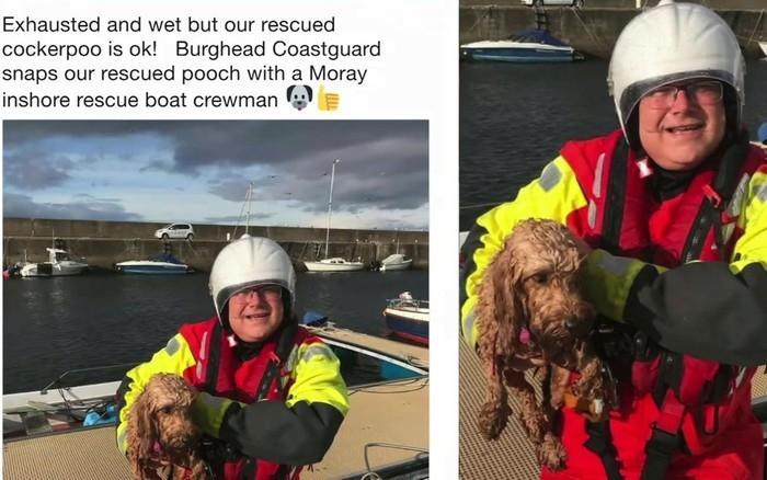 Cachorro é resgato sozinho em alto mar após tempestade (Crédito: BBC)