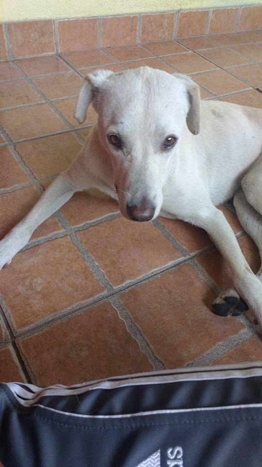 Cão que era de rua, agora tem um novo lar (Crédito: Reprodução/Facebook)