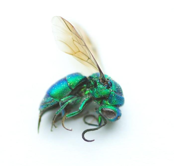 Estudo na Alemanha indica redução de 80% dos insetos voadores (Crédito: Reprodução)