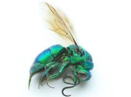 Extermínio de insetos coloca em risco biodiversidade no planeta