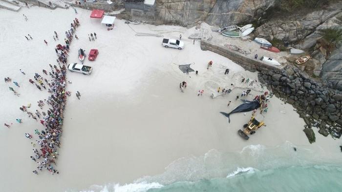 Baleia foi devolvida ao mar na tarde deste domingo (Crédito: Marcelo de Lima)